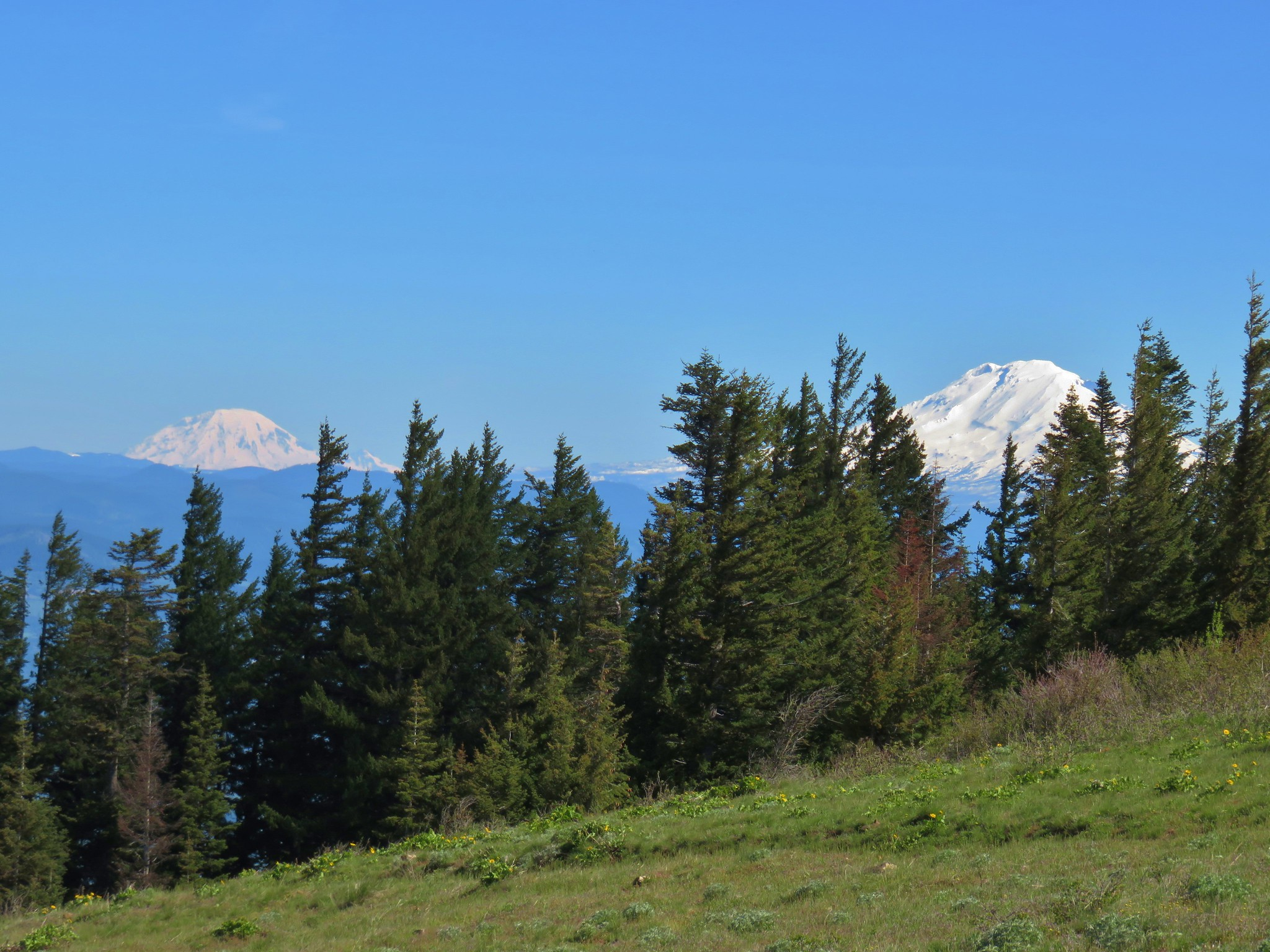 Mt. Rainier and Mt. Adams