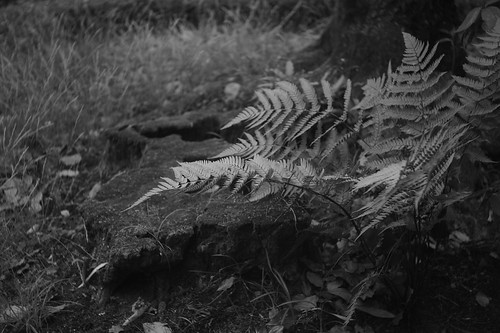 Fern and stumps