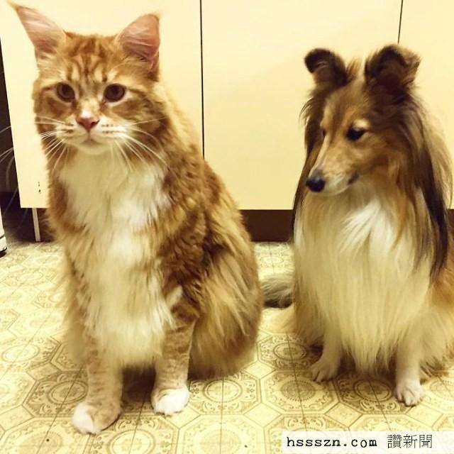 longest-cat-2