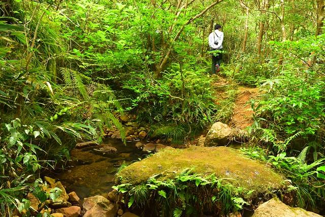 八丈島 唐滝・硫黄沼登山道の森と川