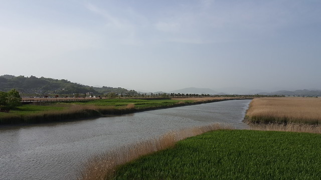 Suncheon Bay Wetland (18)