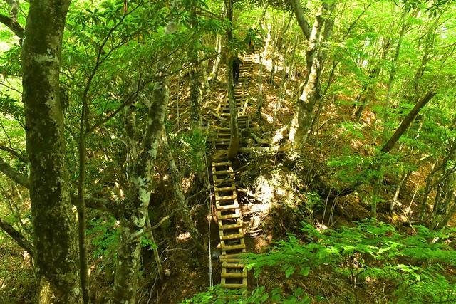 畦ヶ丸 階段が続く登山道