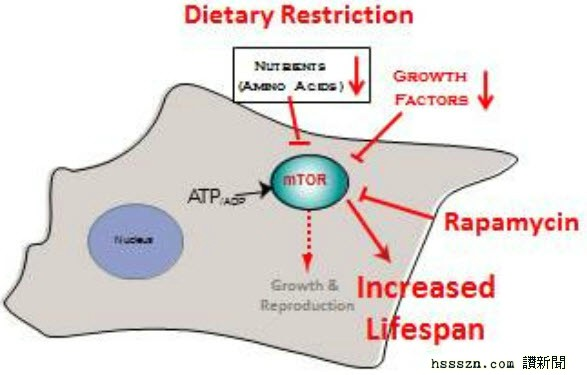 rapamycin-action