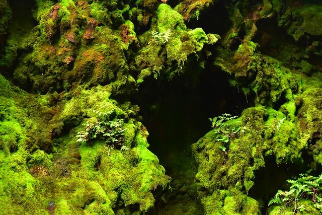 八丈島 唐滝の苔