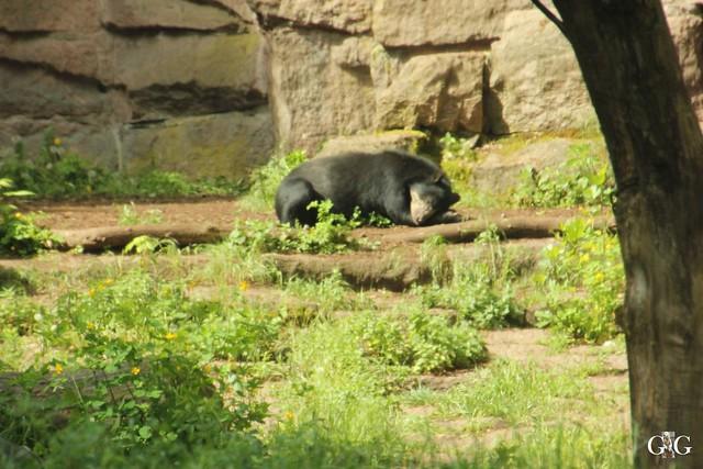 Tierpark Friedrichsfelde 25.05.173