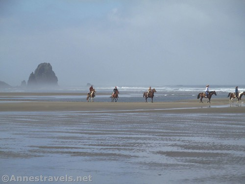 Horses on Cannon Beach north of Haystack Rock, Oregon