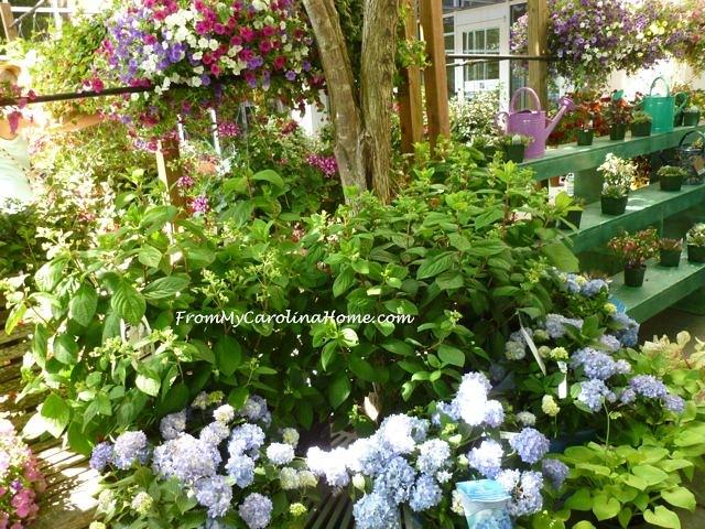 Garden Jubilee ~ From My Carolina Home