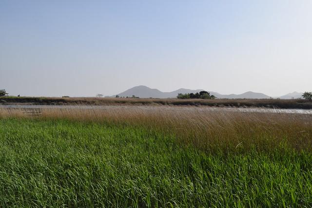 Suncheon Bay Wetland (10)