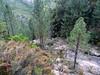 Le ravin de Pinetu Pianu au niveau de sa traversée