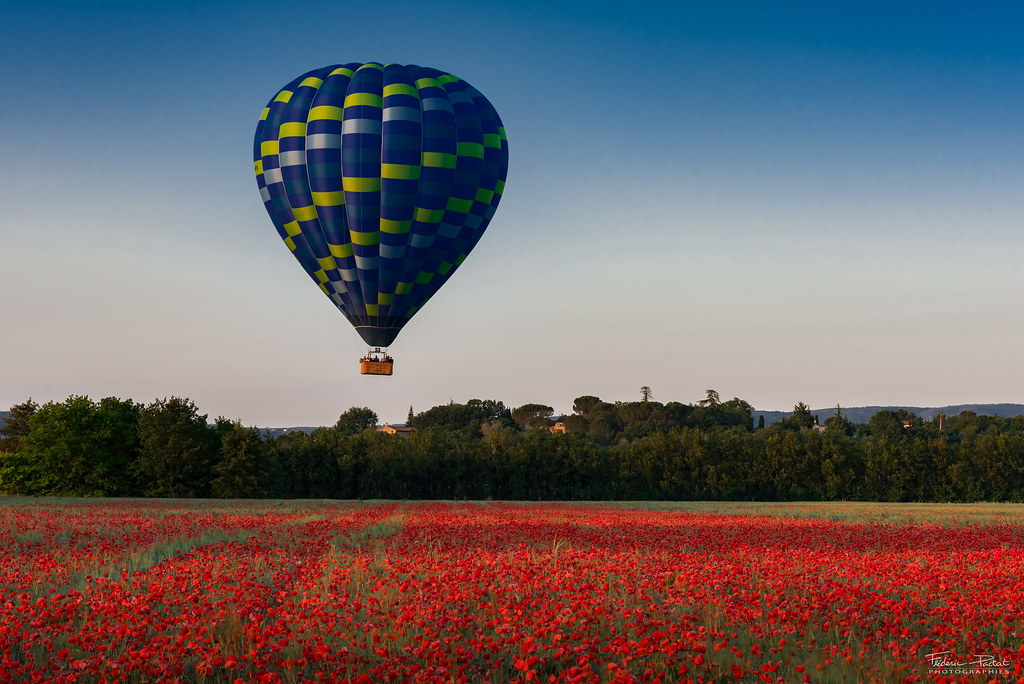 Balloon on poppy field