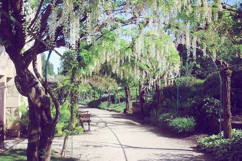 Jardin floral d'Apremont sur Allier (16)