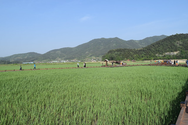 Suncheon Bay Wetland (12)