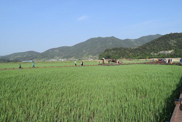Suncheon Bay Wetland (12)