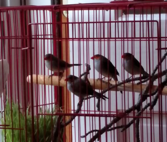 birds2_20170527