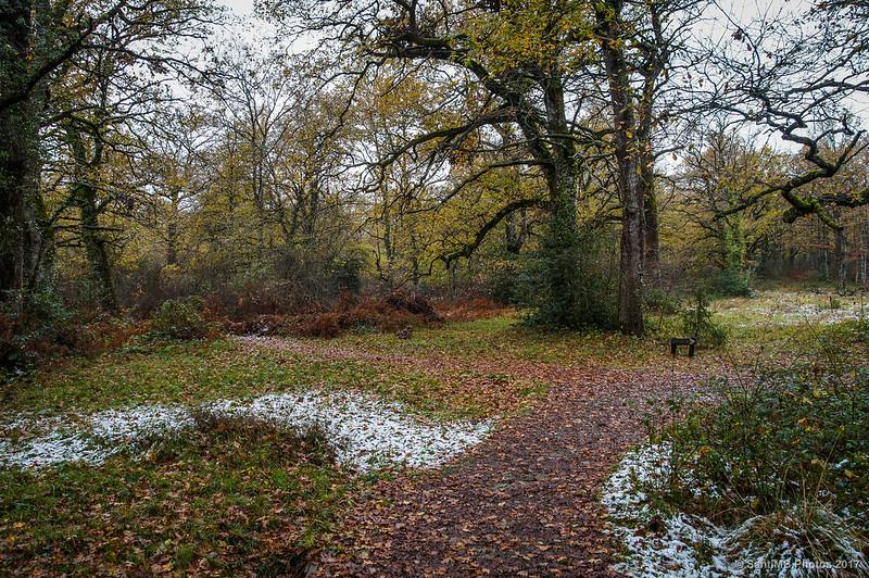 Senda del Bosque de Orgi