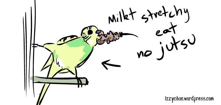 dennis budgie eating millet