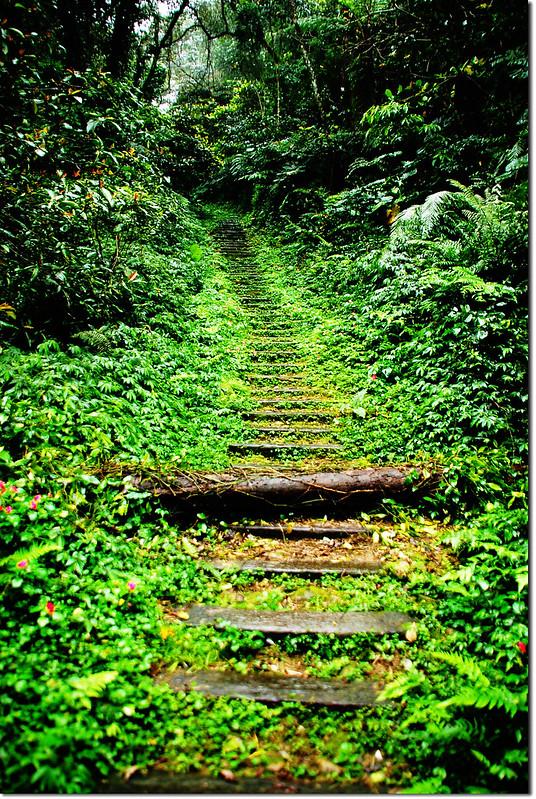 登山步道 1