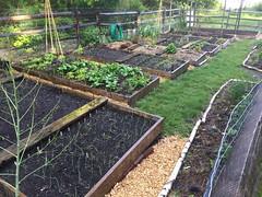 backyard garden 2017-05-21