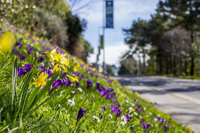 Gwely o flodau gwyllt | Wildflower bank