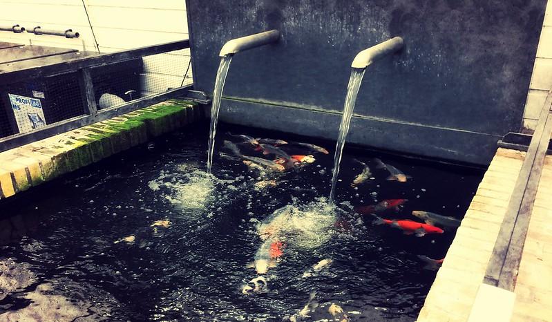Bezoek vijvercentrum Apeldoorn