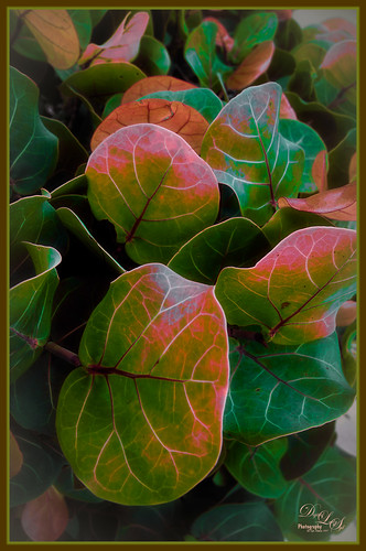 Image of a succulent plant leaves
