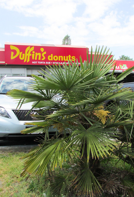 Duffin's Donuts & The Lost Foodie Weekend