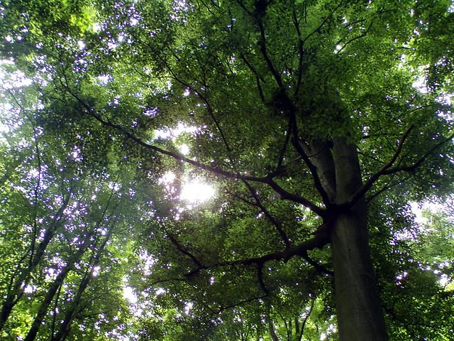 Eilenriede: Elven Ground