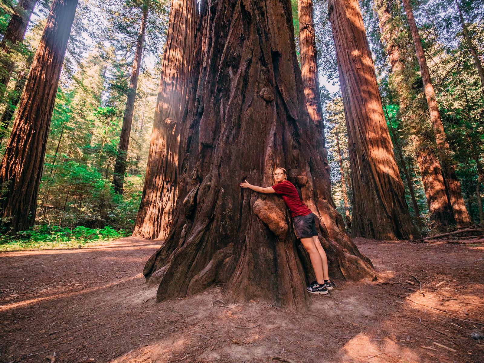 Redwoods-13