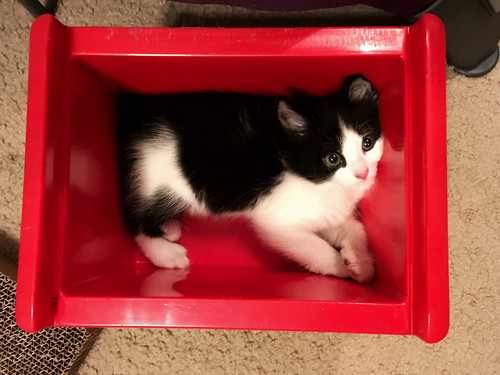 Elvis in his Red Box (May 25 2016) (2)