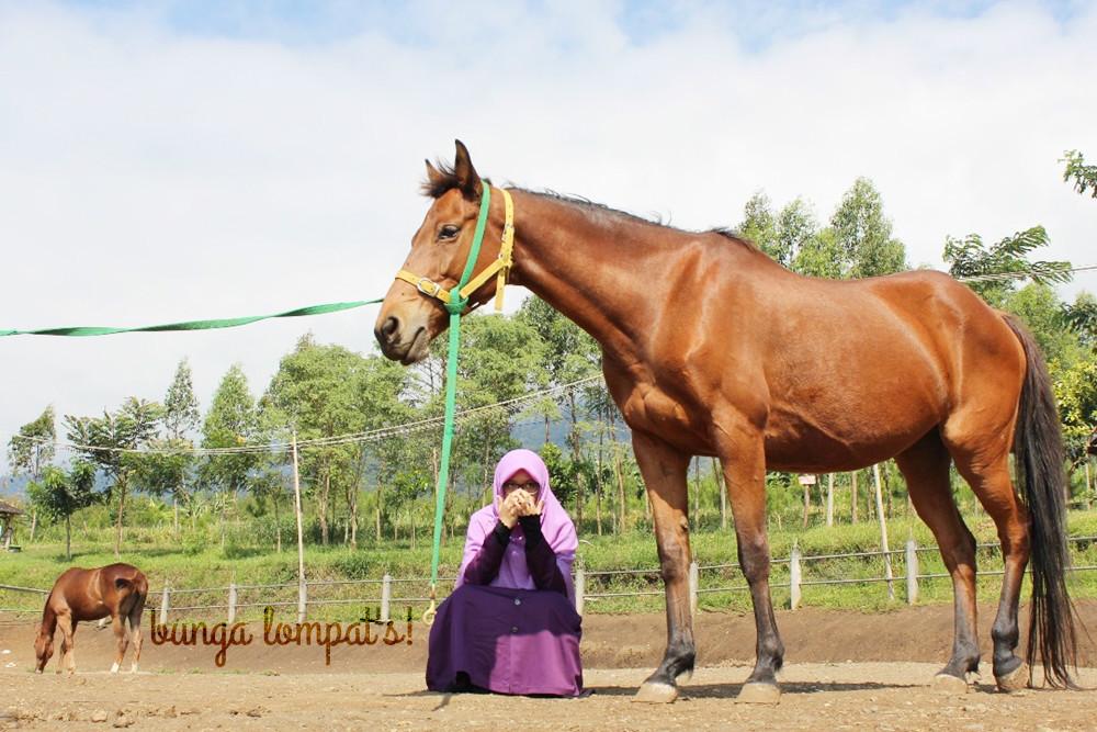 Peternakan Kuda Megastar