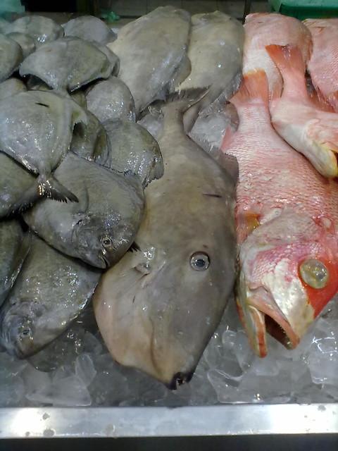 Ikan Ayam 1