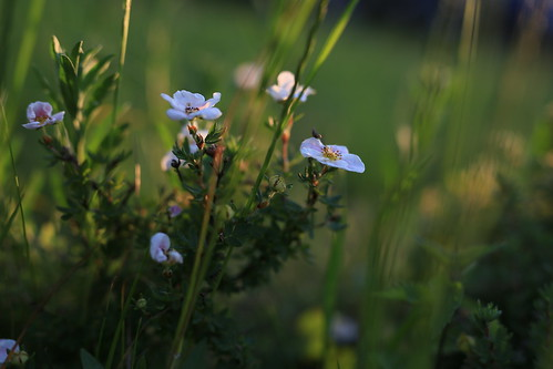 Flowers in the evening sun | by Pascal Volk