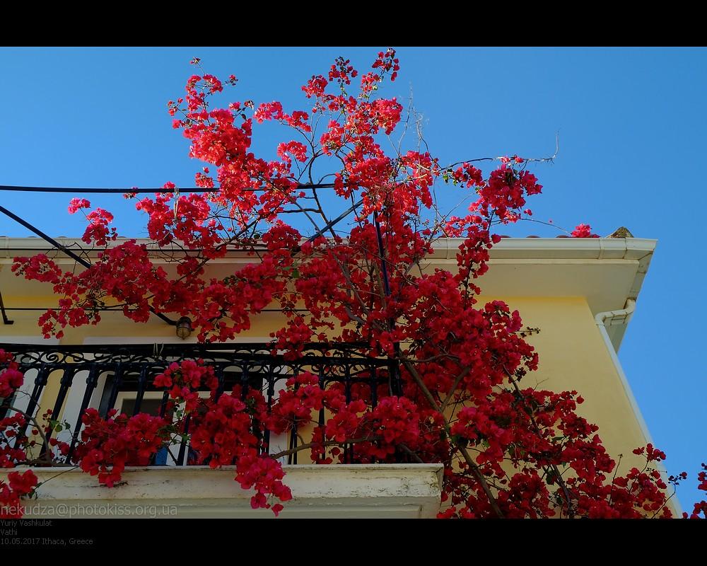 ithaca_vathi_flowers1