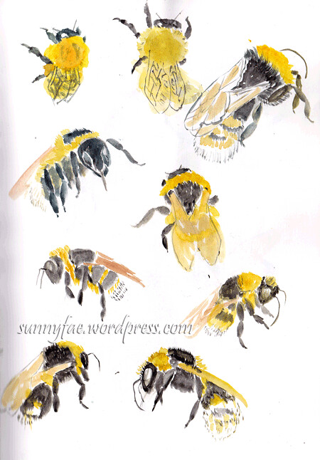 bumble bee sketches 1