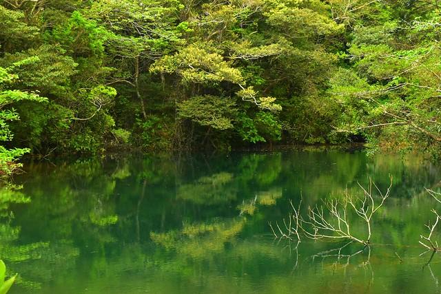 八丈島 エメラルドグリーンの硫黄沼