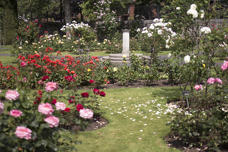 6 Places in Dublin Where You Can Stop and Smell the Roses