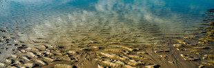Gootchaï 's Photoblog: Quand les nuages se mirent dans l'eau