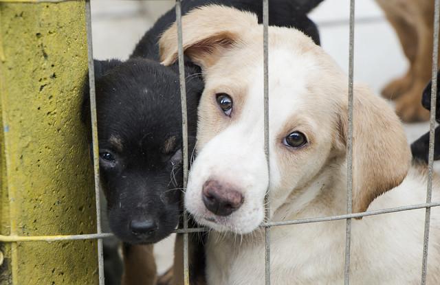 Quer adotar um bichinho? Aproveite a Feira de cães e gatos que acontece neste sábado (13)