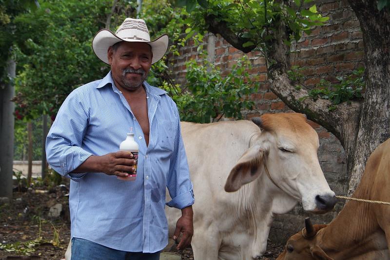 Vacunación bovina con sector ganadero de San Juan Opico