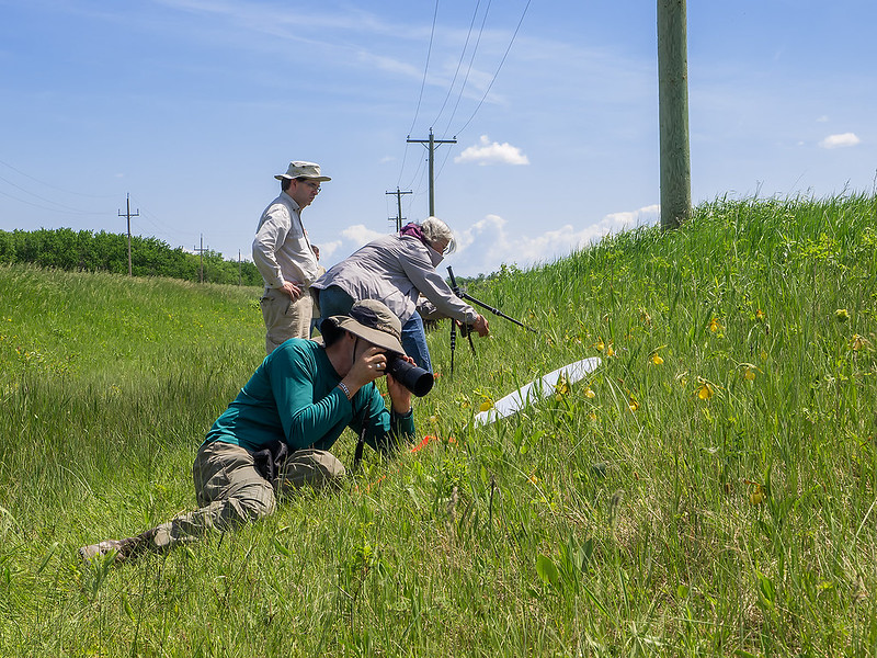 Photographing orchids in Manitoba, Canada