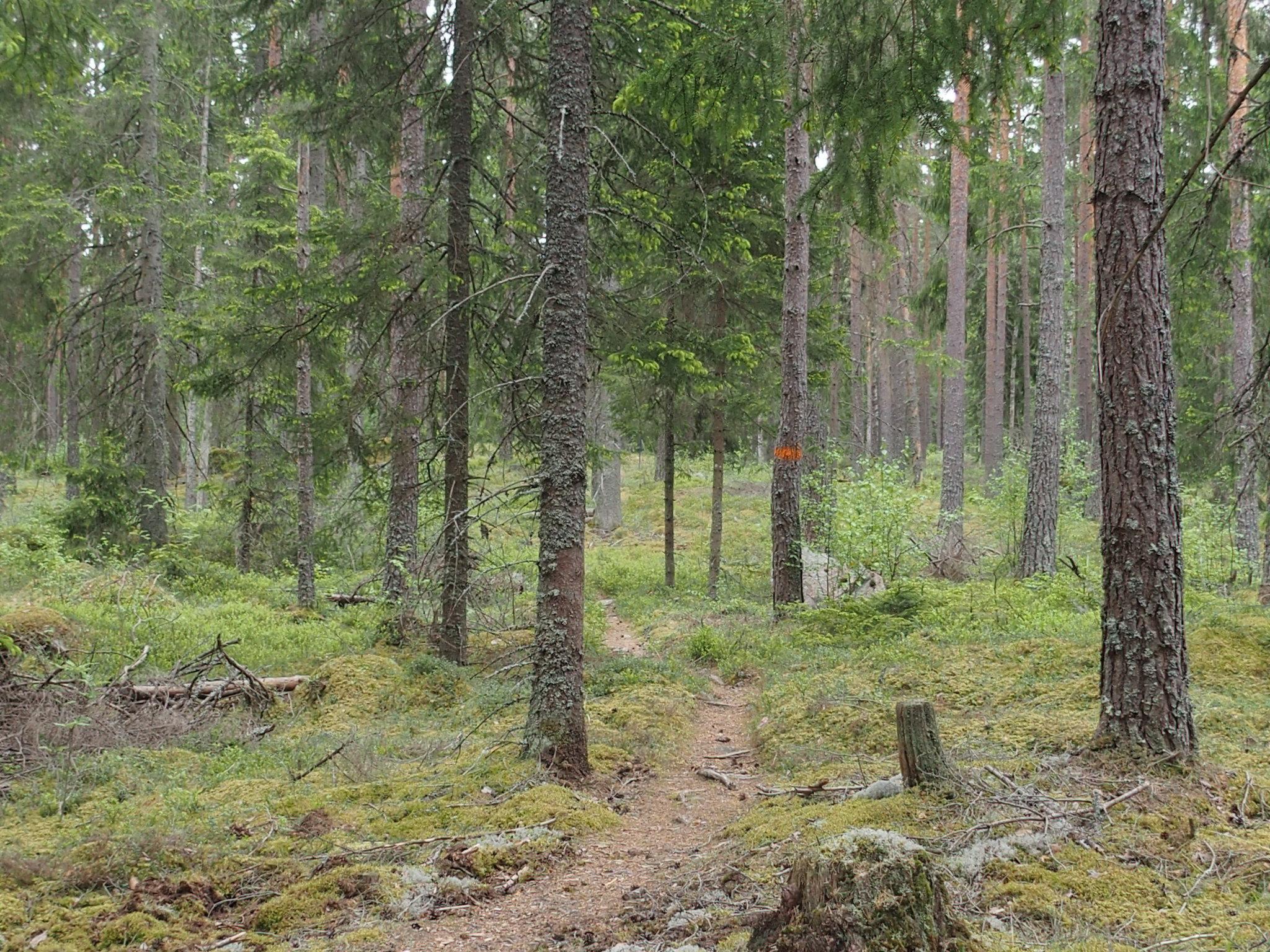 Gles skog finns