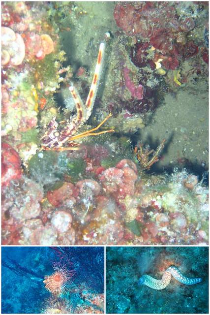 Elba Unterwasser 20171