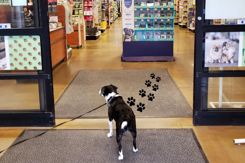 louis-beagle-dog-petsmart-shopping-trip-2