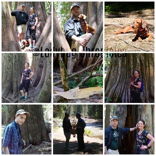 LDBG Ross Creek Cedars