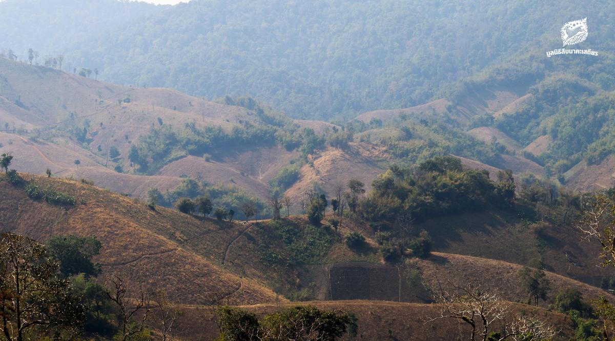 ป่าถูกทำลาย