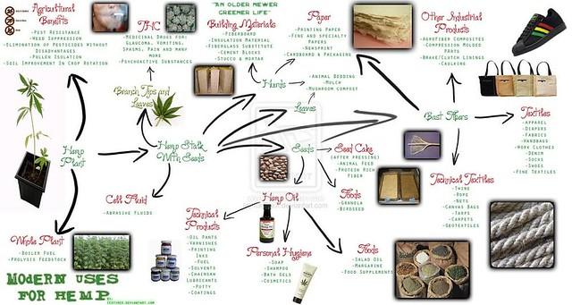 Usos alternativos de la planta de cannabis _infografìa