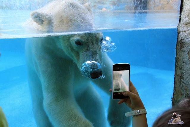Eisbär Fiete im Sosto Zoo 28.05.2017 144