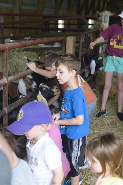 goat farm-41