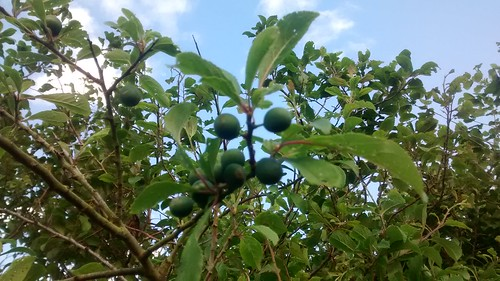 sloes June 17