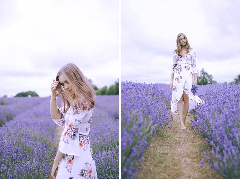 lavender dreams 7